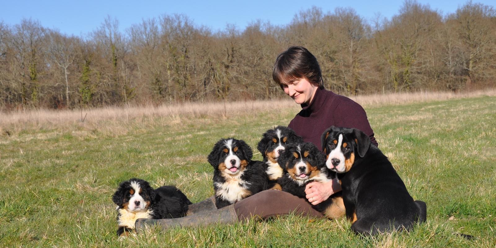 elevage de chien Bouvier Bernois, Grand Bouvier Suisse et Entlebuch, les Joyeuses Gambades